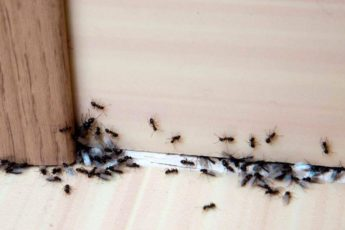 Что делать, если у вас дома появились муравьи: эффективные способы борьбы 1